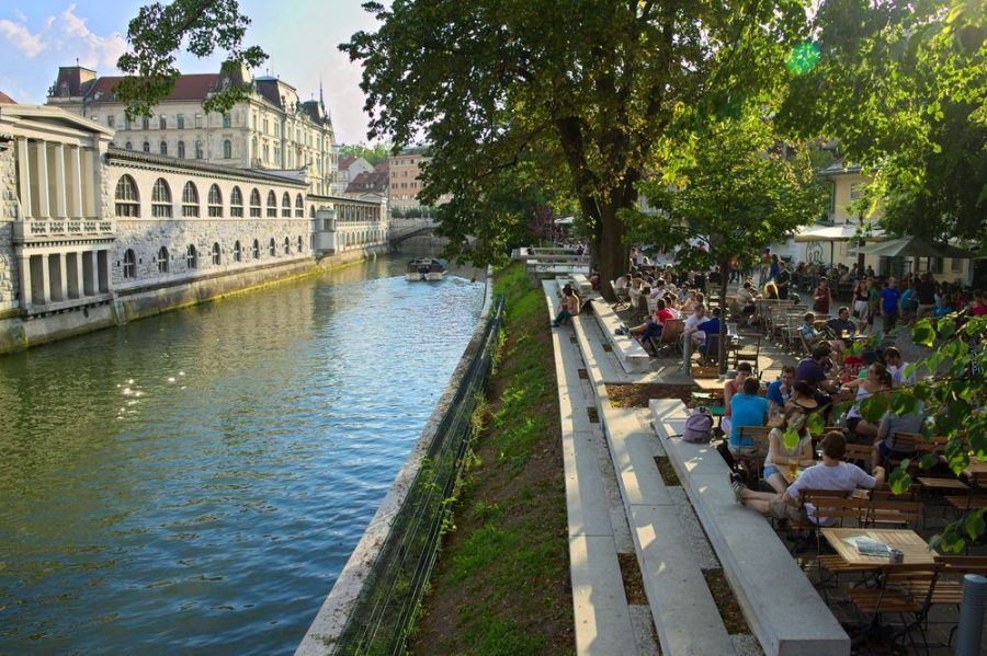 Life at the riverbanks of the Ljubljanica. Copyright: Nicola Vollmer.